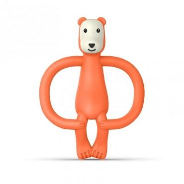 Animals Bear Gryzak...