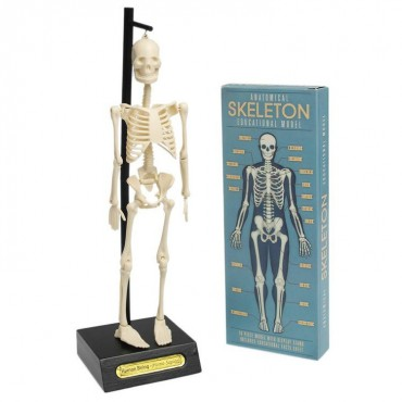 Anatomiczny model szkieletu...